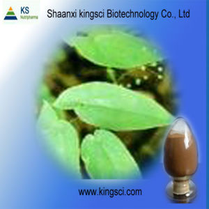 Epimedium Grandiflorum Extract (KS2011)