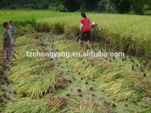 43cc Rice Harvester Brush Cutter pictures & photos