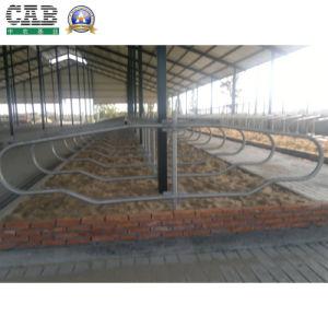 Galvanized Cow Free Stall