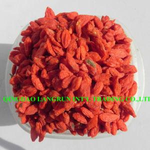 Super Grade Organic Goji Berry Premium Organic Wolfberry 500g