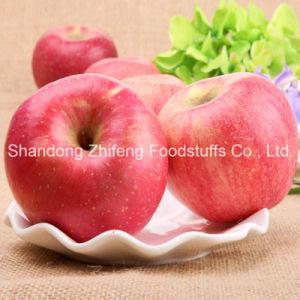Fresh Fruit FUJI Apple pictures & photos
