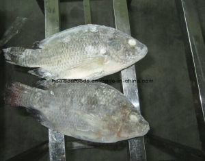 Good Quality Frozen Tilapia Whole with Whole Sale Price pictures & photos
