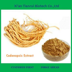 Pilose Asiabell Extract, Codonopsis Extract Polysaccharides 10%~50% pictures & photos