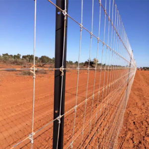 High Quality High Tensile Deer Fence/ Field Fence Sheep Wire Mesh Fence China Supplier pictures & photos
