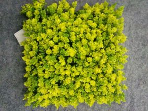 Artificial Plants and Flowers of Artificial Grass Gu20170226095851 pictures & photos