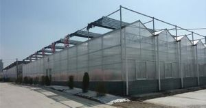 China PC-Sheet Greenhouse Best Manufacturer and Good Design