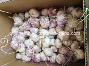 New Crop Normal White Garlic 5.0-6.0cm pictures & photos