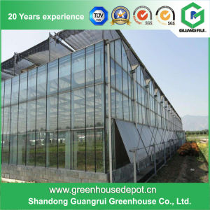 Cheap Venlo Type Glass Greenhouse for Vegetable and Flowers Growing pictures & photos