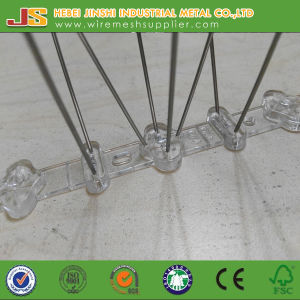 Traps Pest Control Type and Birds Pest Type Spikes Made in China pictures & photos