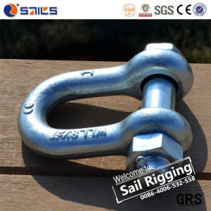 Alloy Pin Lifting Galvanized D Shackles pictures & photos