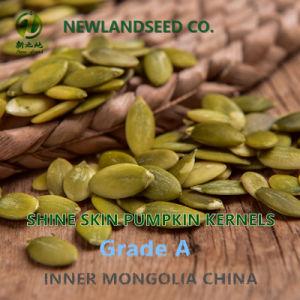 Health Benefits Shine Skin Pumpkin Seeds Kernel a/AA/AAA pictures & photos