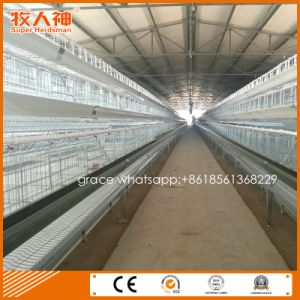 Light Steel Structure Poultry Shed for Layer Cage Farm From Factory pictures & photos