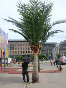 Artificial Plants and Flowers of Coco Palm 4.8m 15lvs (GU-BJ-831-4.8M) pictures & photos