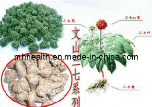 Wholesale High Quality Sanchi Extract (notoginsenosides) 40 PCS/500g pictures & photos