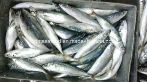 Japanese Scad Frozen Fish pictures & photos