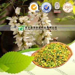 Crude Medicine Flos Sophorae Immaturus pictures & photos
