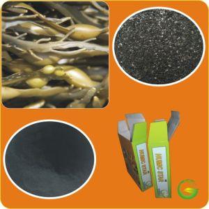 Organic Bio Seaweed Extract Fertilizer pictures & photos