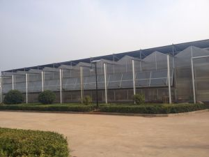 Factory Supplier Agriculture Multi-Span Venlo Polycarbonate Sheet Greenhouse for Sale