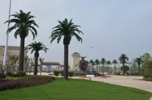Artificial Plants and Flowers of Date Palm Gu-SL902101800 pictures & photos