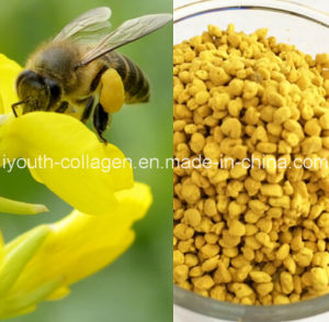 Top Bee Pollen, 100%Natural Rape Bee Pollen, Anticancer, Killer of Prostate, No Antibiotics, No Pathogenic Bacteria, No Heavy Metal, Often Take Prolong Life pictures & photos