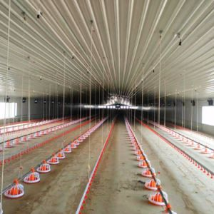 Prefab Steel Structure Poultry House with Full Set Automatic Machines pictures & photos