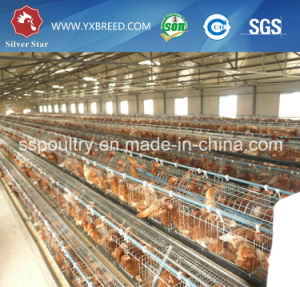 Silver Star Chicken Layer Poultry Designs Cage / Chicken Breeding Cage pictures & photos