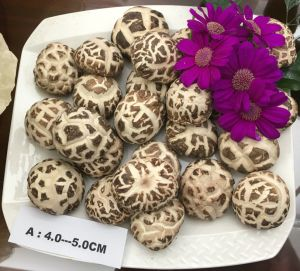 White Flower Mushroom Dried Vegetable pictures & photos
