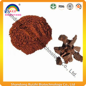 High Quality Natural Pine Bark P. E Polyphenol/OPC 90%, 95% pictures & photos