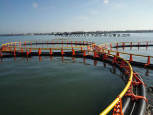Floating Fish Cage Make in HDPE Material pictures & photos