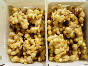 Professional Exporter of Fresh Ginger (100-250g) pictures & photos