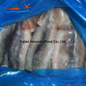 Frozen Seafood Squid pictures & photos