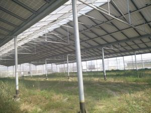 Galvanized Pipe Use in Greenhouse pictures & photos