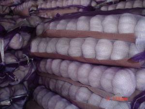 Fresh New Crop Garlic (5.0CM) pictures & photos