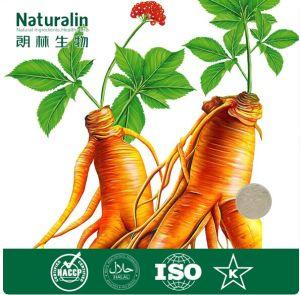 100% Natural Korean Ginseng Root Extract (7%~80% Ginsenoside)