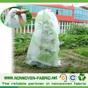 Agriculture Non Woven Cloth, TNT Textile for Fruit Cover pictures & photos