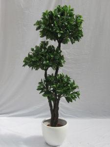 Artificial Bonsai Plants pictures & photos