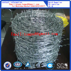 Galvanized Barbed Wire|Direct Factory| pictures & photos