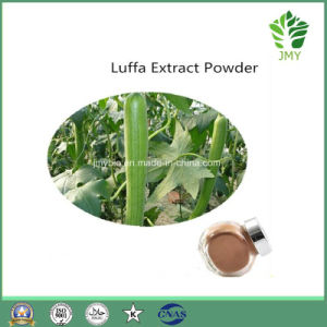 100% Natural Luffa Cylindrica Extract 10: 1, 20: 1 pictures & photos