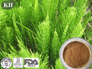 Equisetum Arvense Extract Help to Decongest The Skin pictures & photos