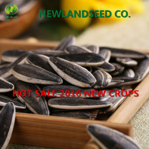 Heath Foods Refined Quality Chinese Sunflower Seed New Type 601 pictures & photos