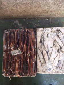 Frozen Squid /Illex Squid /Argentine Squid pictures & photos