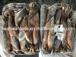 Illex Squid for Market 400-600g pictures & photos