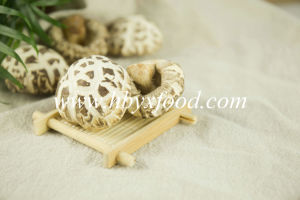 Quality Flower Shiitake Mushroom Dried Vegetable pictures & photos