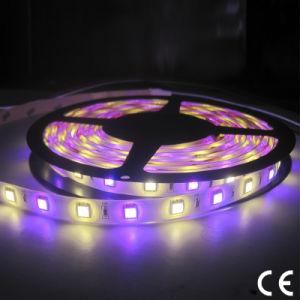 DMX Control RGBW SMD 5050 3528 LED Flexible Strip Light pictures & photos