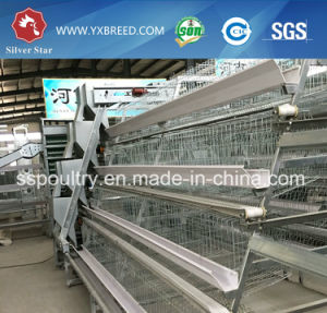 Poultry Feed Machine for Layer Chicken pictures & photos