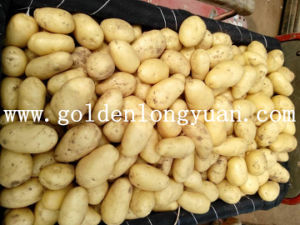 Fresh New Crop Potato Yellow and Clean Skin pictures & photos