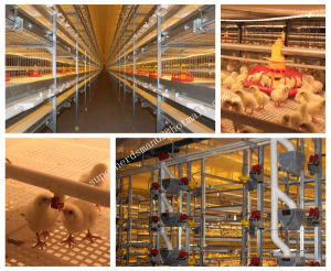 Automatic Chicken Cages for Broiler House pictures & photos