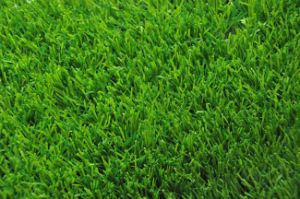 Premium Natural Green Landscape Artificial Grass pictures & photos