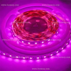 Pink Lighting LED Light Bar LED Light LED Strip Light pictures & photos