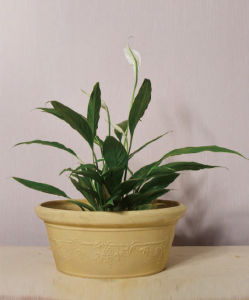 Recycled Plastic Flower Pot (10EDH30)